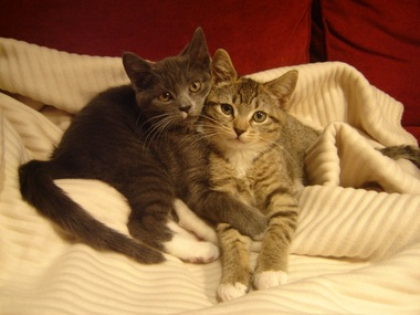 Two delightful kittens, aping for the camera
