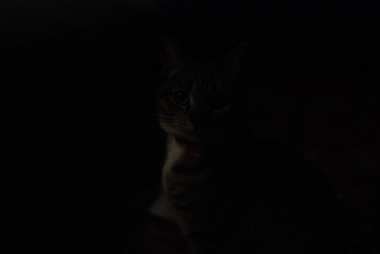 A kitten in the dark.